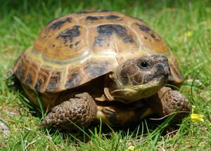 Черепахи2