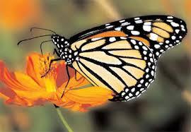 бабочки2