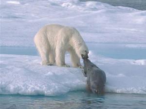 белый медведь2