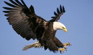 орел1