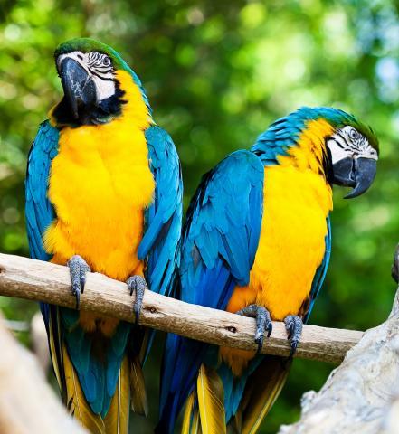 Красочные попугаи