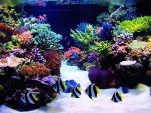 Кораллы2