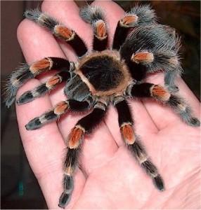 пауки2