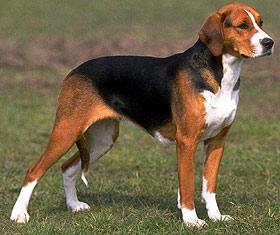 собаки2