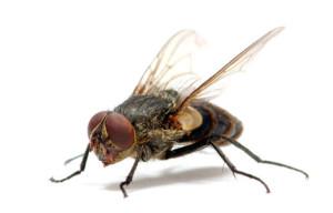 мухи2