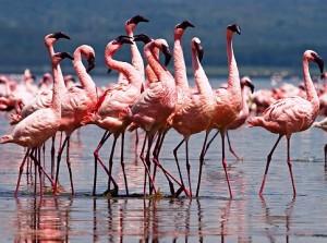 Фламинго2