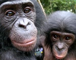 Бонобо22