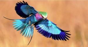 Райские птицы1