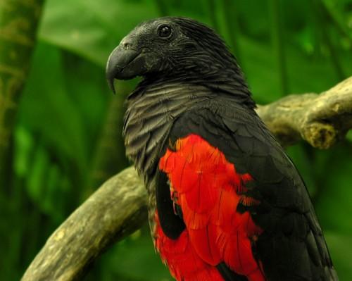 Картинки по запросу Необычные птицы
