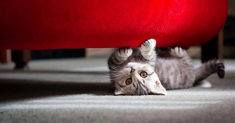 Способы уборки квартиры с домашними животными