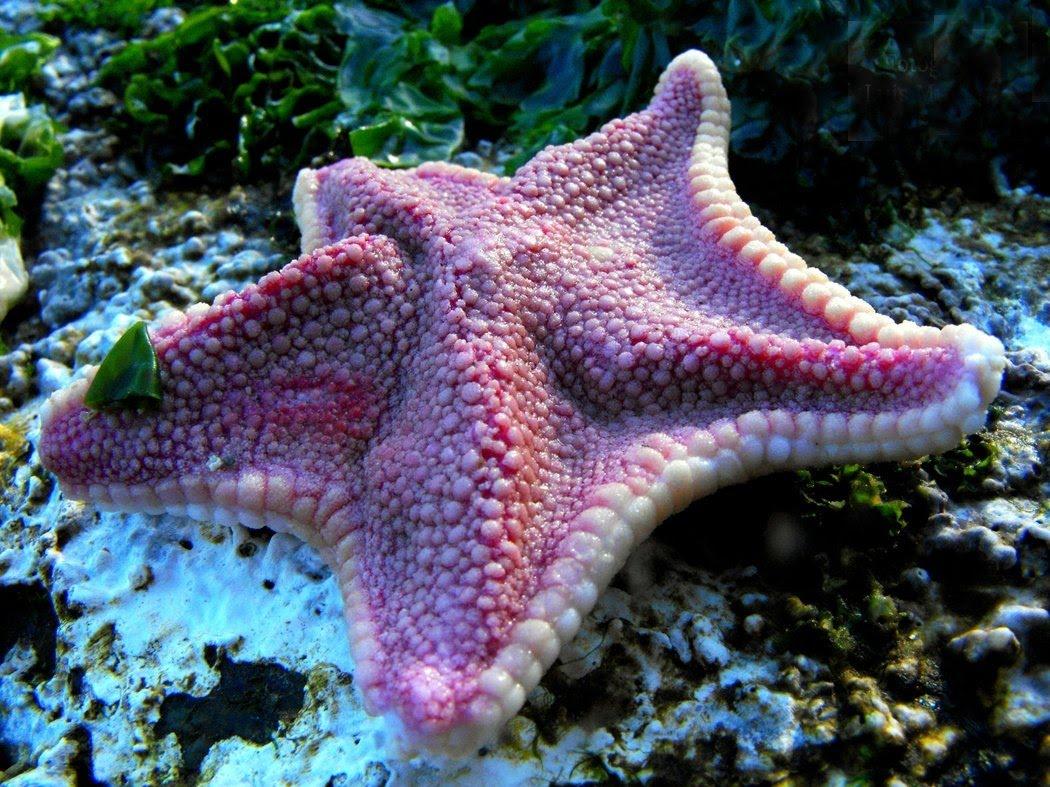 Морская звезда3473