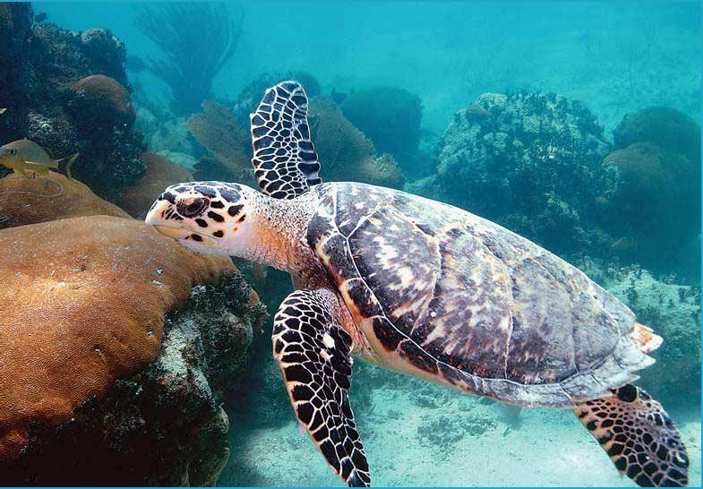 Морская черепаха22222222222