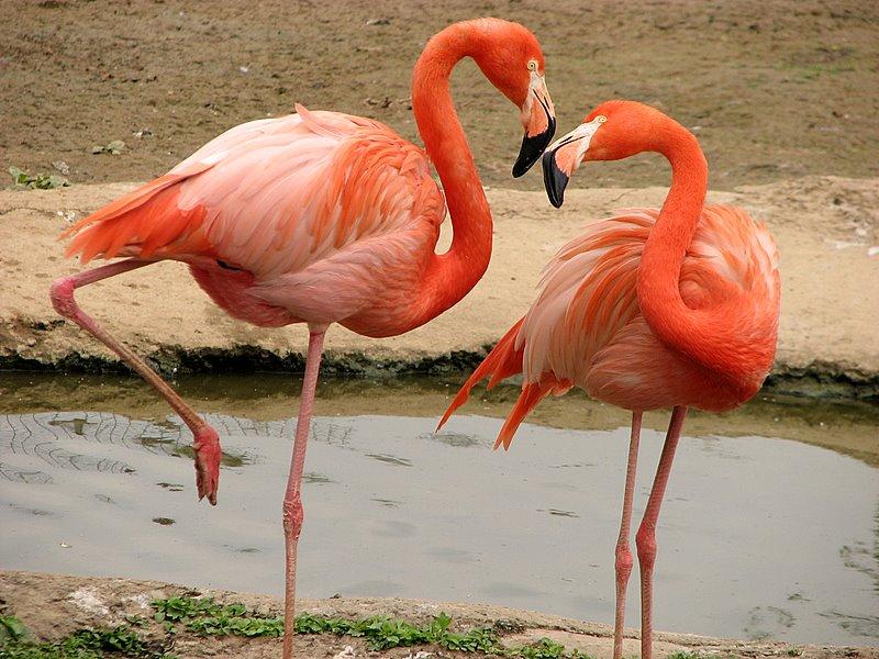 Фламинго22