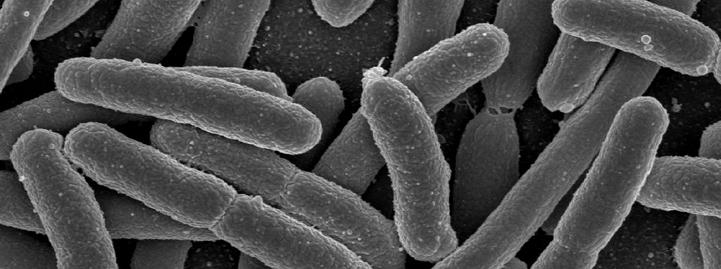 Эубактерии1111111