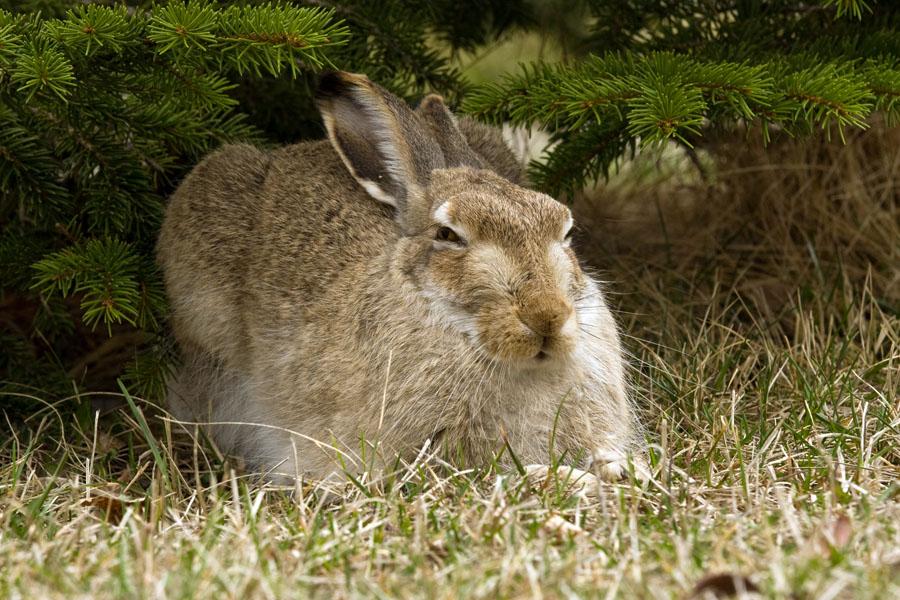 Кролик111111111111111134