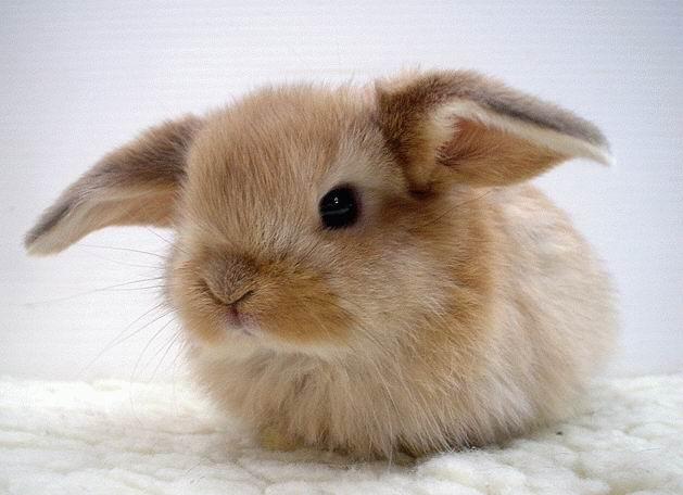 Кролик21332134
