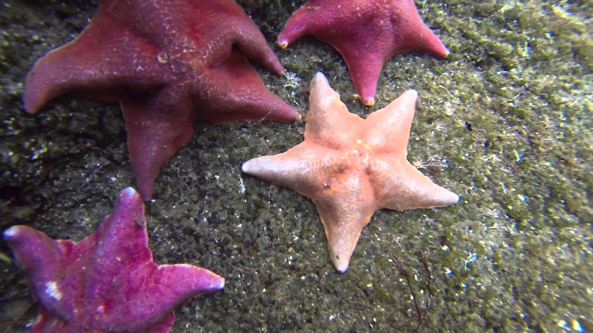 Морская звезда9674