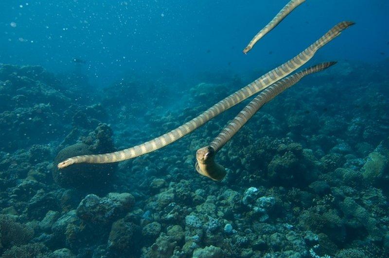 Морская змея45