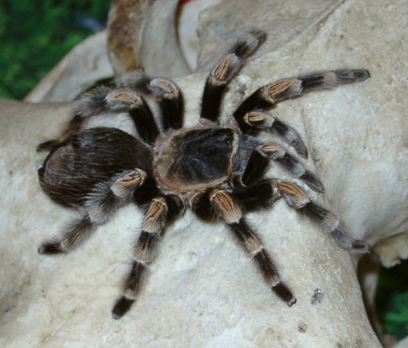 10 экзотических животных, которых люди держат дома
