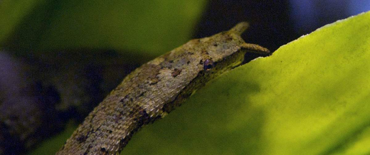 щупальценосная змея22