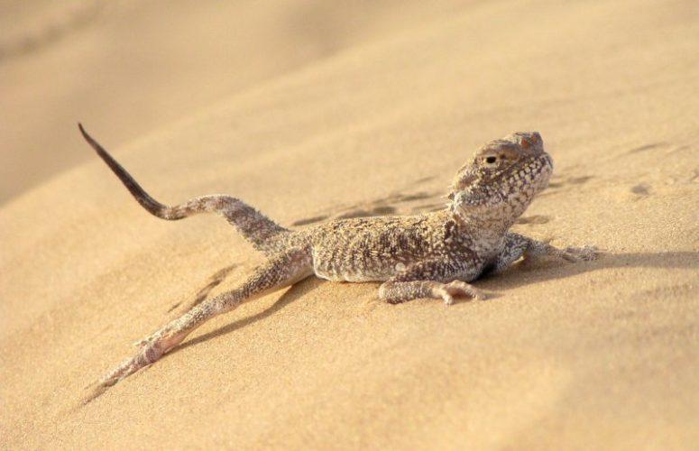 Почему научные эксперименты над животными так опасны?