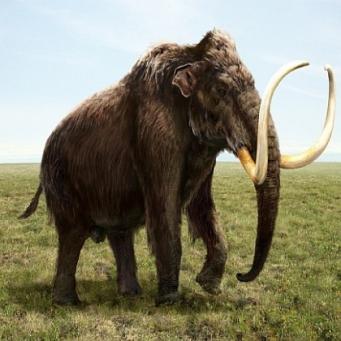 Самцы мамонты погибали чаще, чем самки
