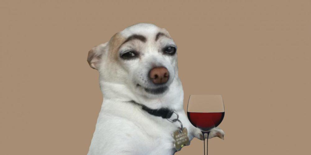 Собаки видят черно - белым? Миф!