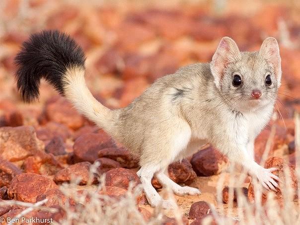 Экологи обнаружили животное, считавшиеся вымершим
