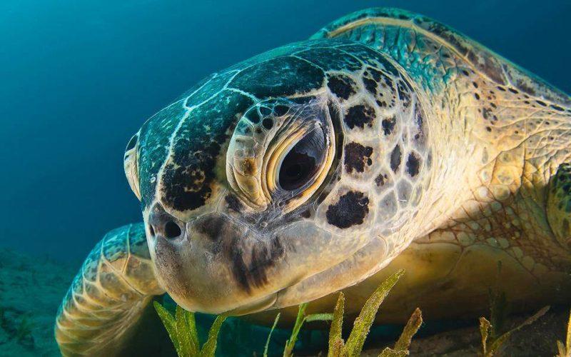 Климат меняется, а также меняются черепахи