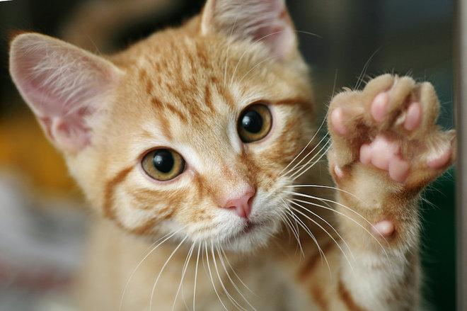 Как определить кот или кошка?
