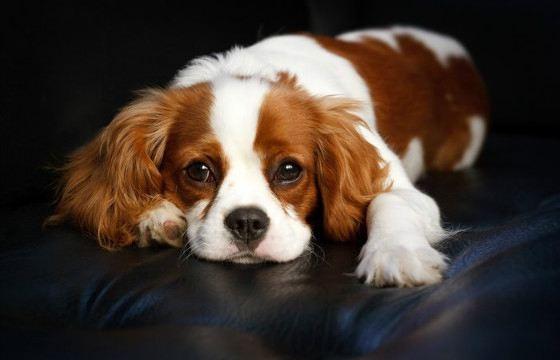 Почему собаки едят свои фекалии?