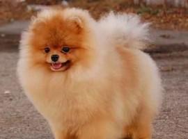 В штате Висконсин усыпляют собак из-за возможности эпидемии