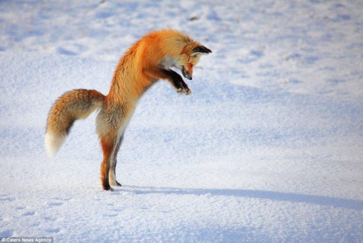 Самый быстрые животные в мире