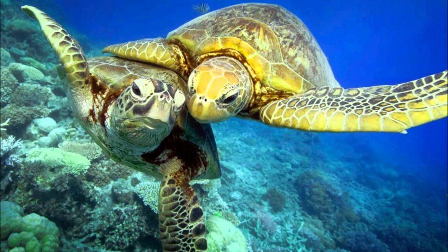 Морские черепахи умеют есть ластами